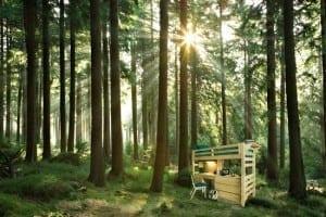 Open Loft in Trees