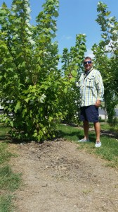 James Jannetides stands next to one of the plantings from 2014.